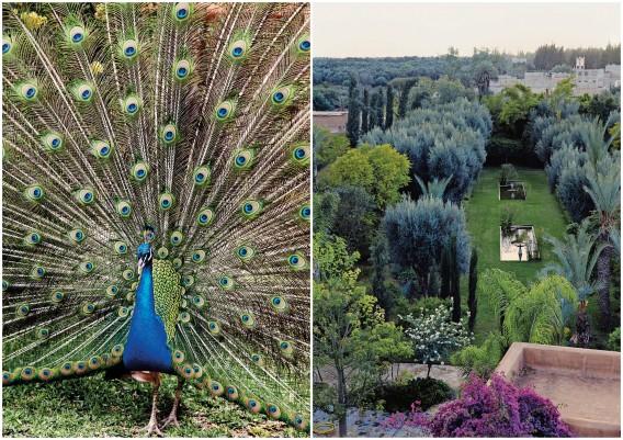 Karl Morcher's garden in Taroudant
