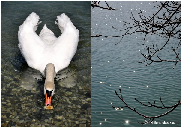 Photos of Zagreb in spring - lake Jarun