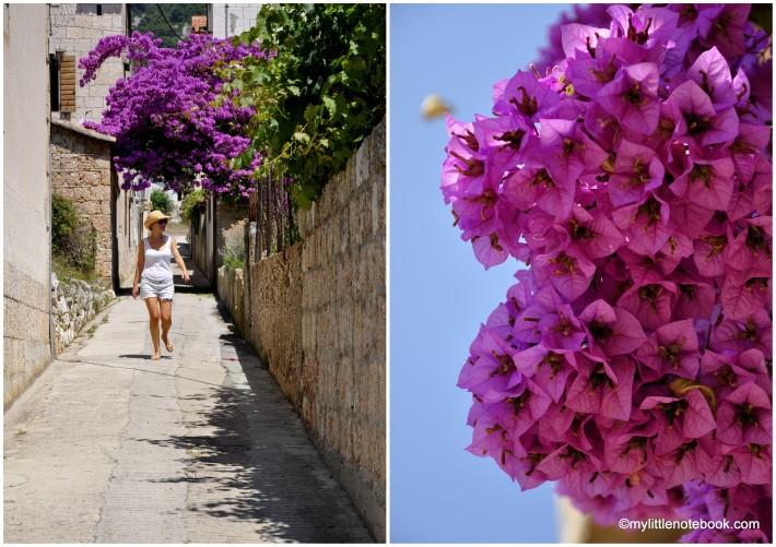 beautiful flowers on the island Vis in Croatia