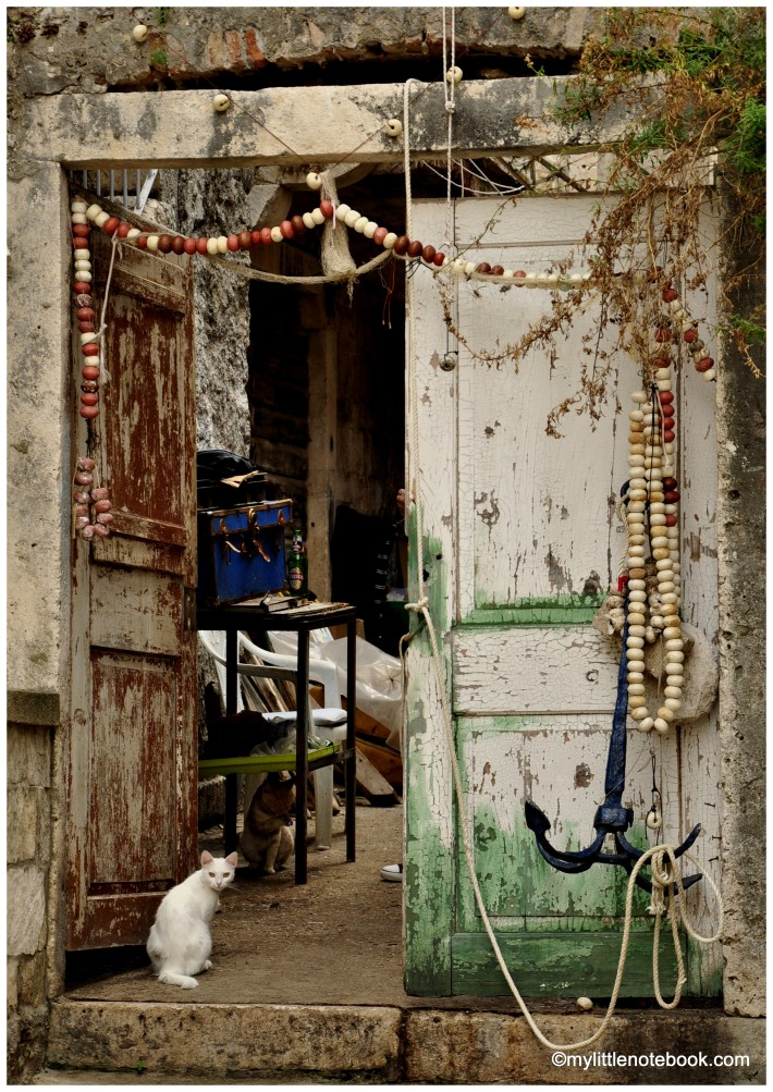 White cat sitting in front of a shabby door