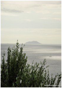 green and grey hues of olive tree and the sea
