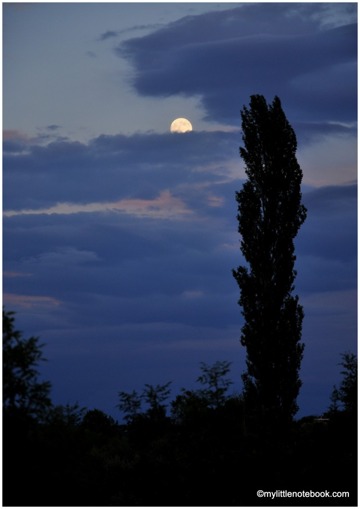 full moon and dark blue sky, tall cipres tree