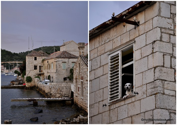 stone house in Vis and dalmatian dog