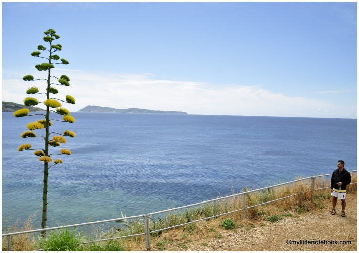 a man walking by the sea and passing by agave plant
