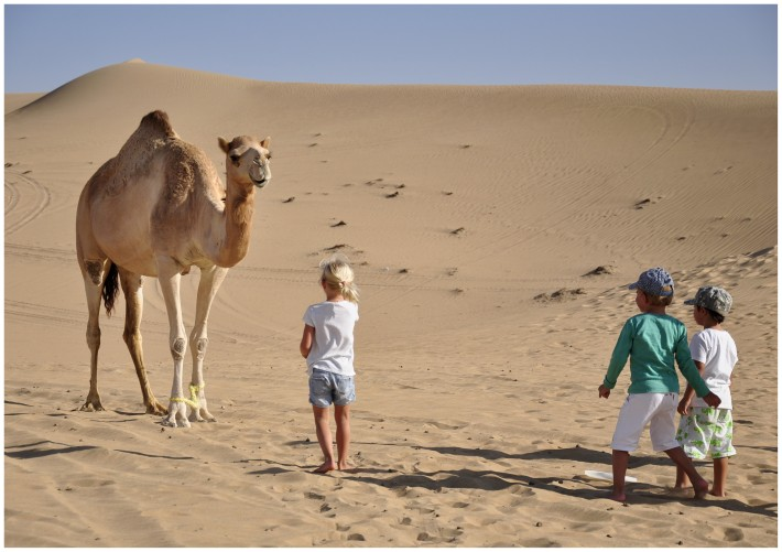 camels in a desert playing with children