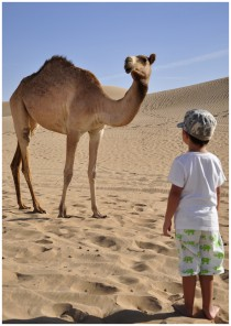 little boy playing with a camel