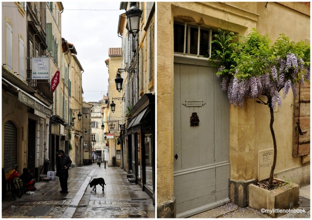 Wisteria in Arles