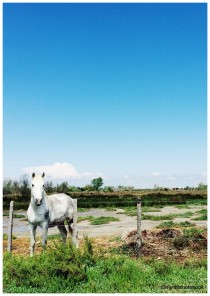 Camargue region in the South of France