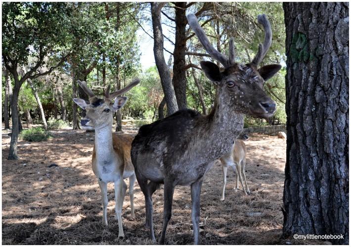 Croatian wildlife