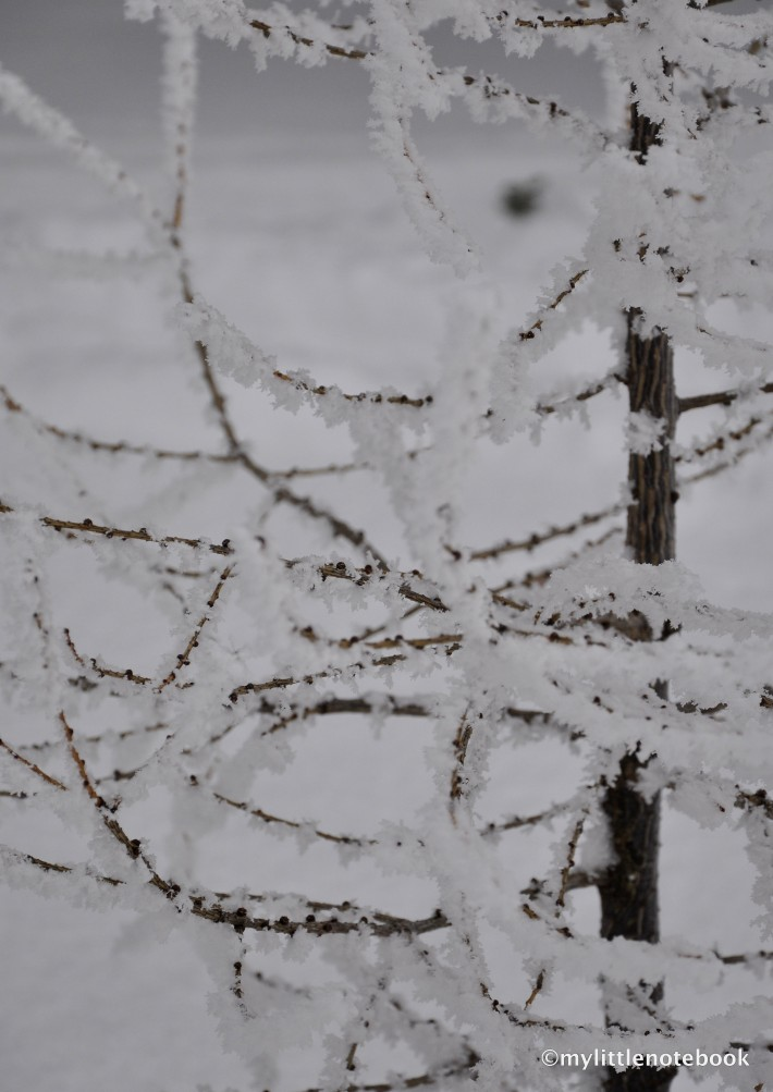 Branches of a tree in winter