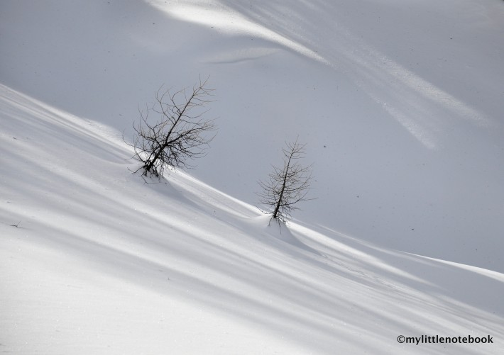 Deep snow and little trees peaking