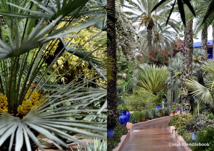 beautiful garden Majorelle