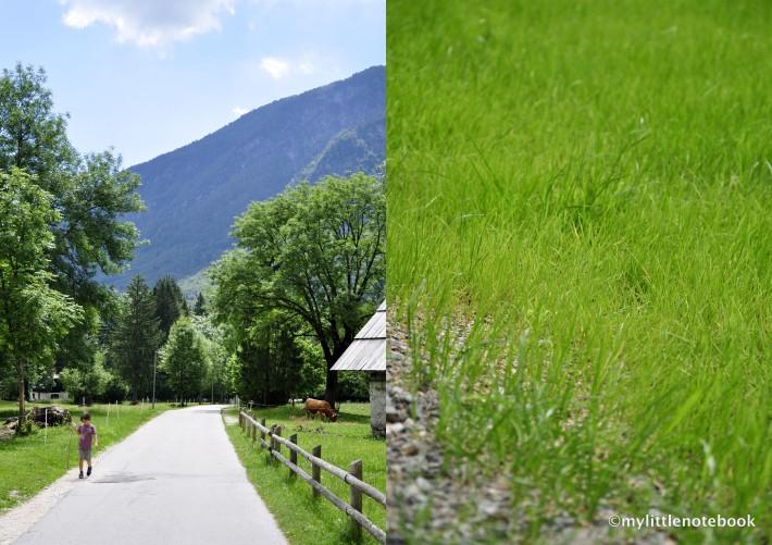 pastoral summer